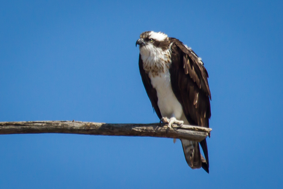 Female aside nest