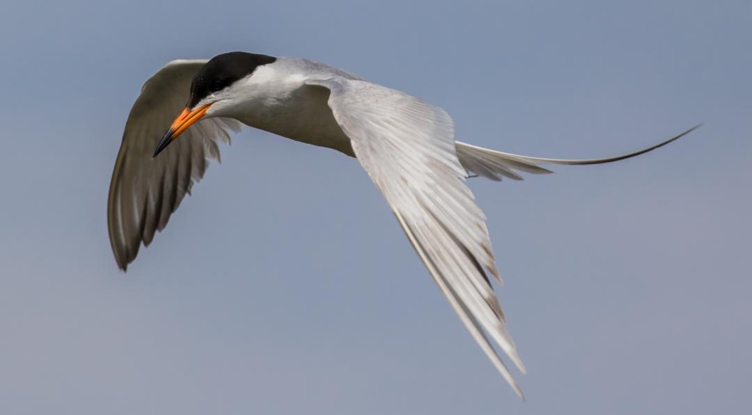 Manitoba Marshland Birds