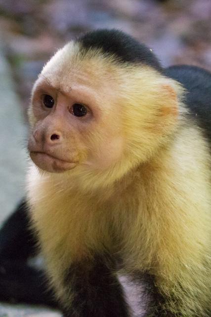 Costa Rica Day 11: Manuel Antonio National Park