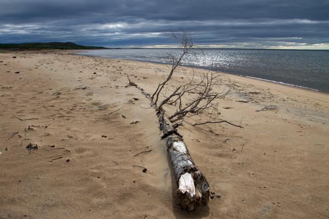 Tree, sand, sea