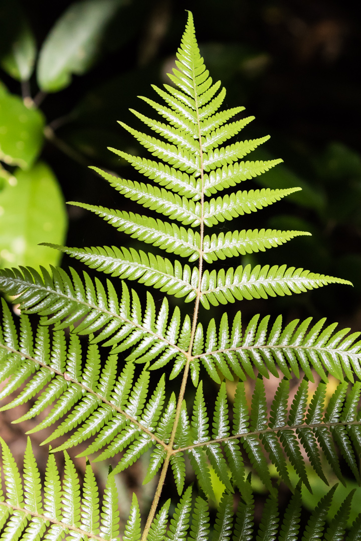 Silver fern. Not only are these ferns common in the Tiritiri Matangi forests, but they do double duty as the logo for New Zealand's national rugby union team, The All Blacks.